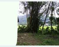 Land - land for sale @ gannoruwa , kandy in Peradeniya