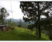 Land - land for sale at kandy belwood in Ampitiya