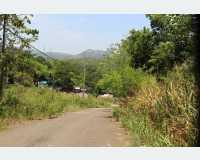 Land - land for sale in naula in Dambulla