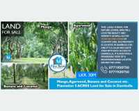 Land - valuable  land for sale @ dambulla in Dambulla