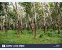Land - rubber land for sale in Avissawella