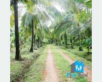 Land -  නිවසක් සහිත වටිනා වගාවන් සහිත ඉඩමක්.  in Palapathwela
