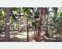 Land - නිවසක් සහිත රමණීය ඉඩමක් දඹුල්ලෙන් in Palapathwela