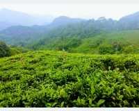 Land - mema idama itha ikmanin vikinimata atha.amathanna. in Kithulgala